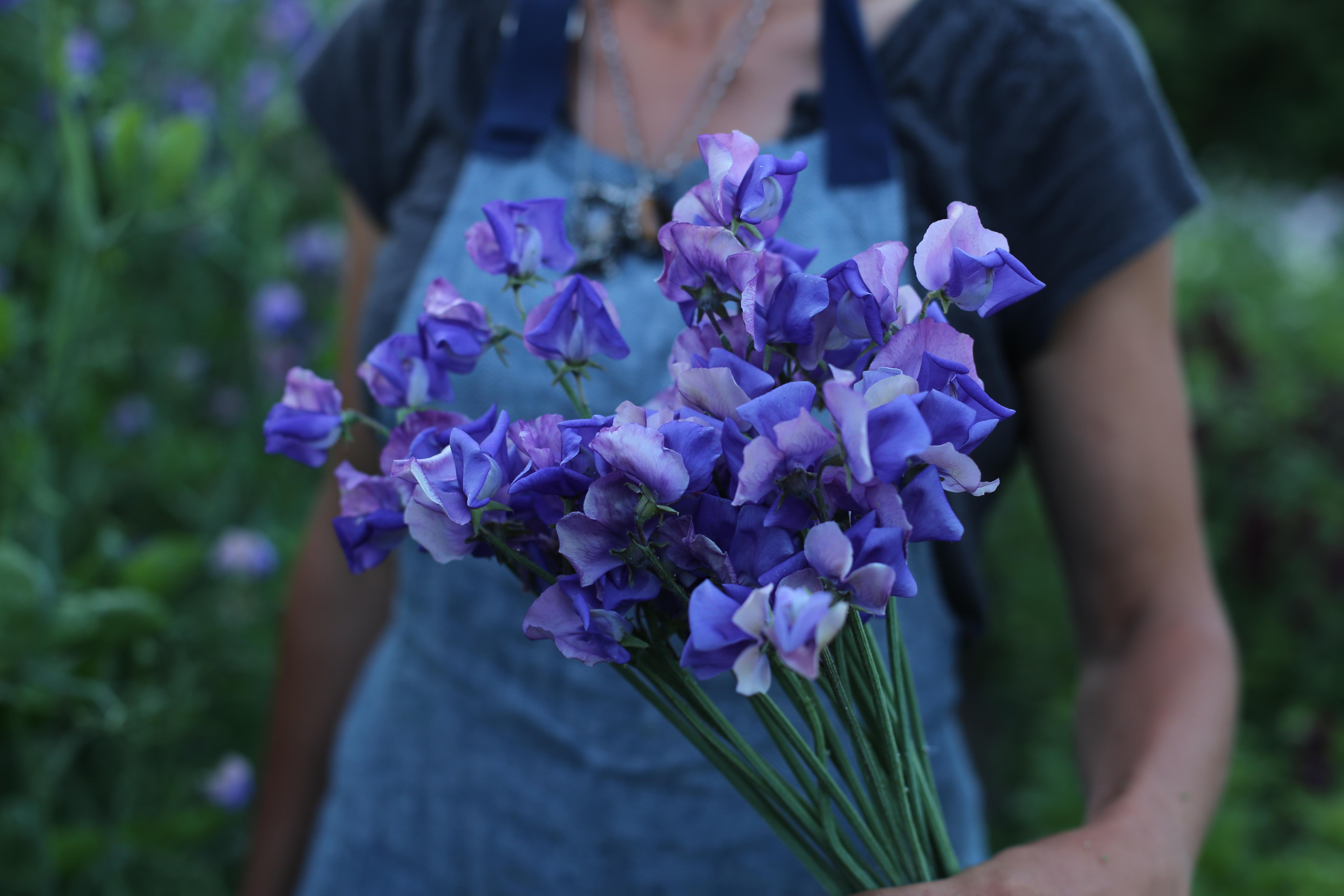FLOWER FOCUS My favorite Sweet Peas Floret Flowers