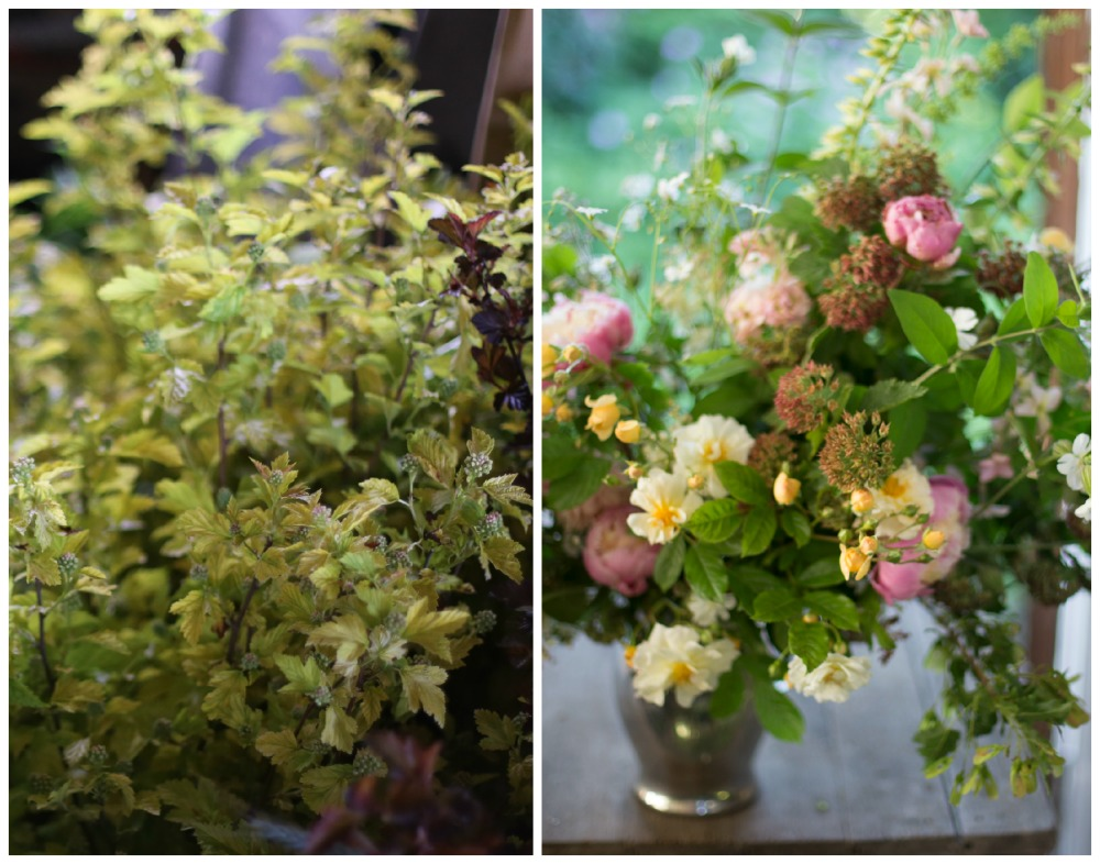 FLOWER FOCUS: Favorite foliages and fillers - Floret Flowers