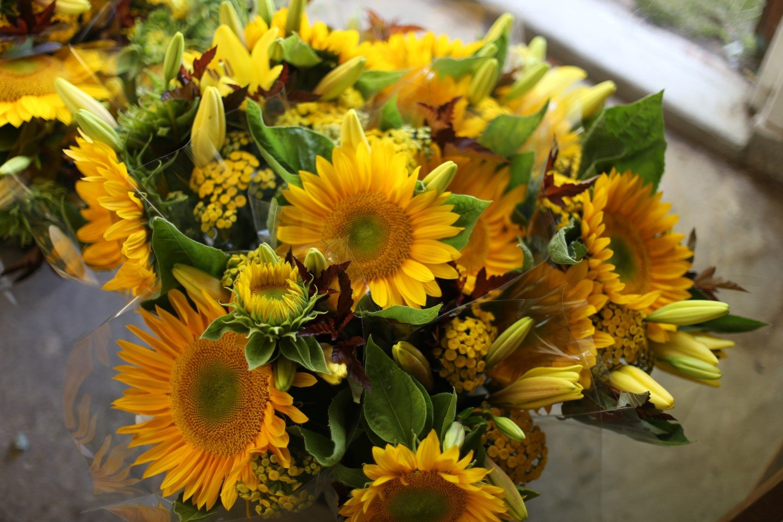 Heat loving sunflowers
