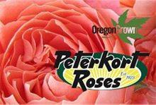 peterkort-roses