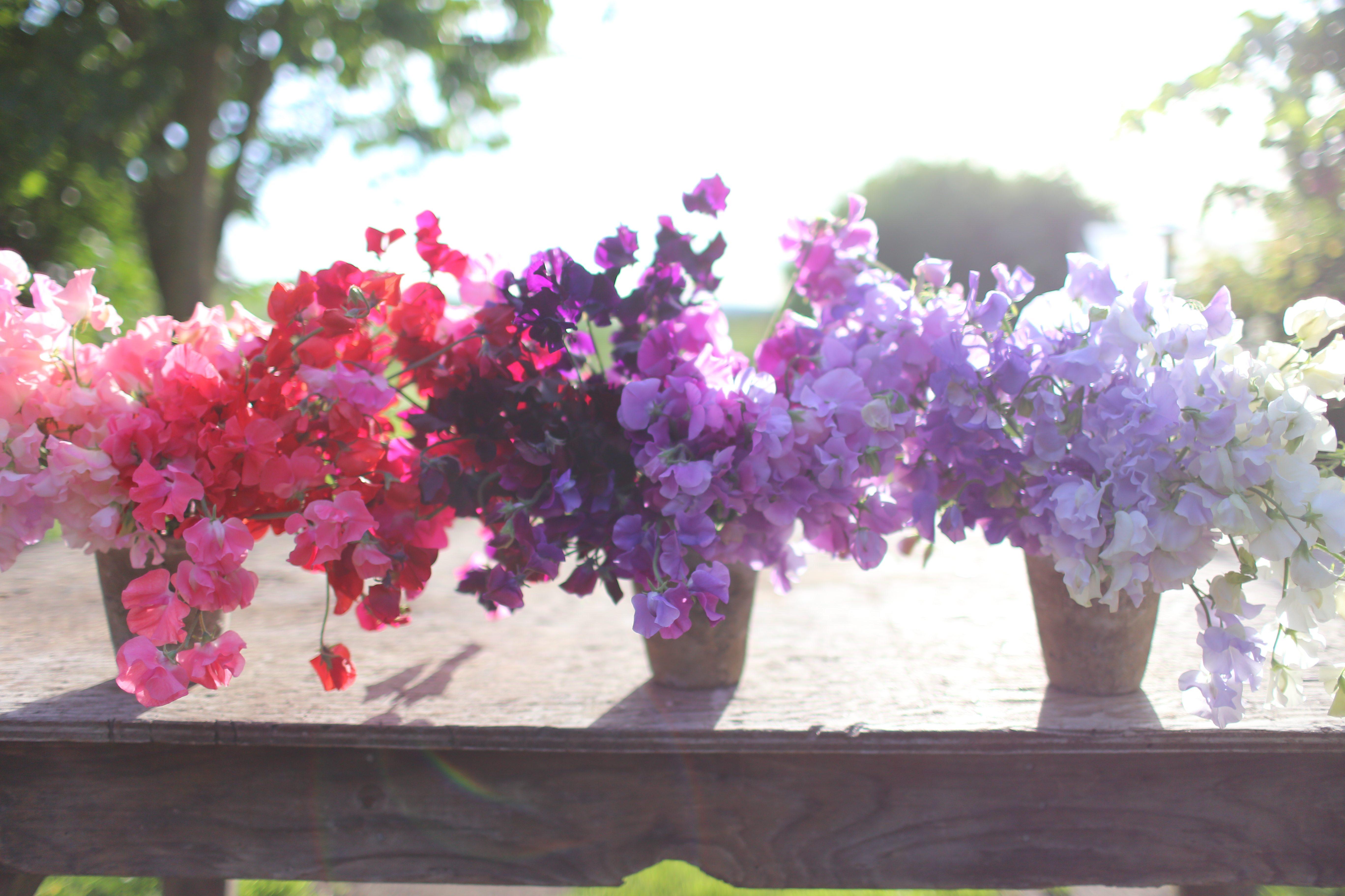 The Seasonal Flower Alliance {June 19}