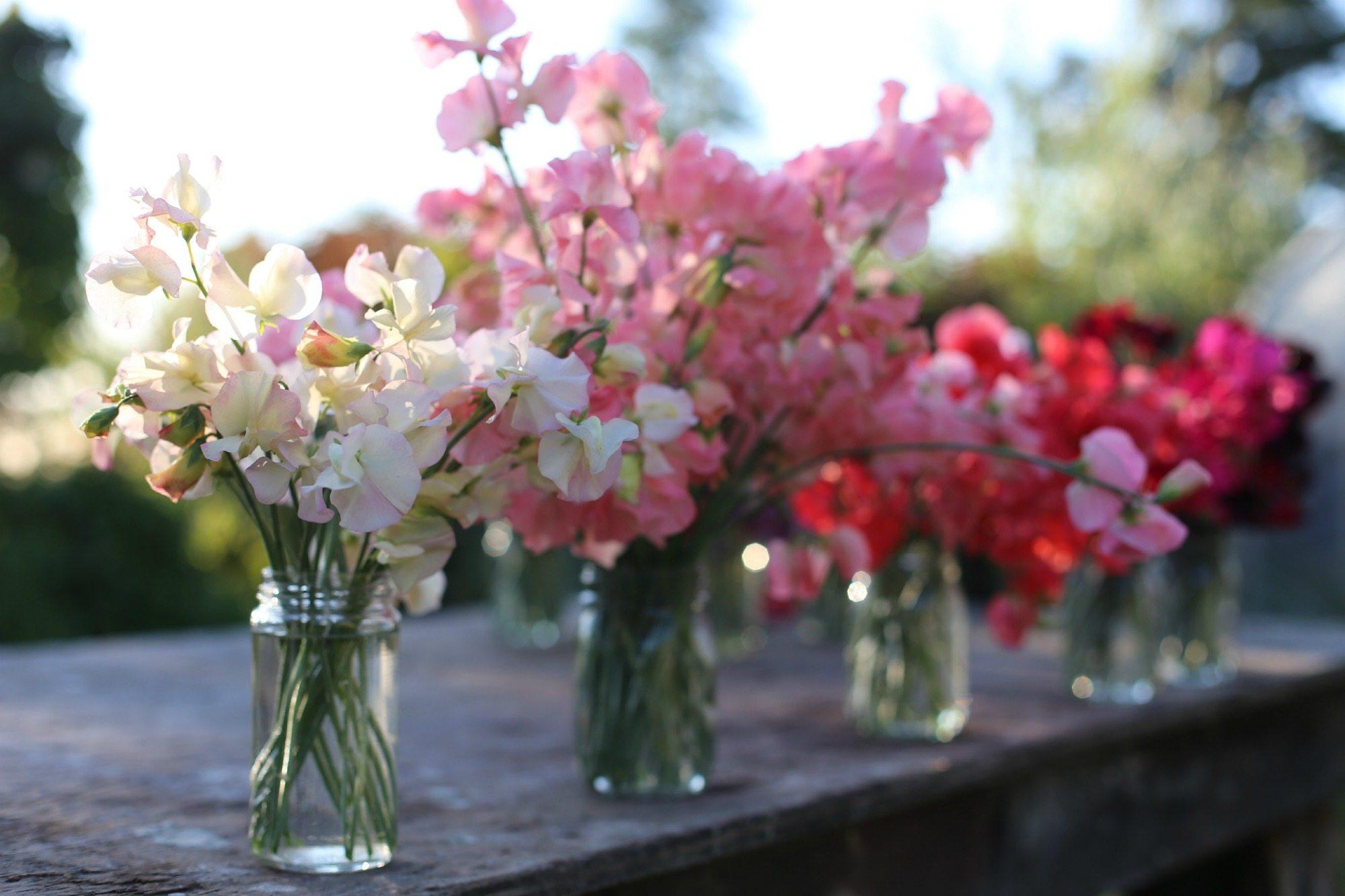 Cut Flower Crops Floret Flowers