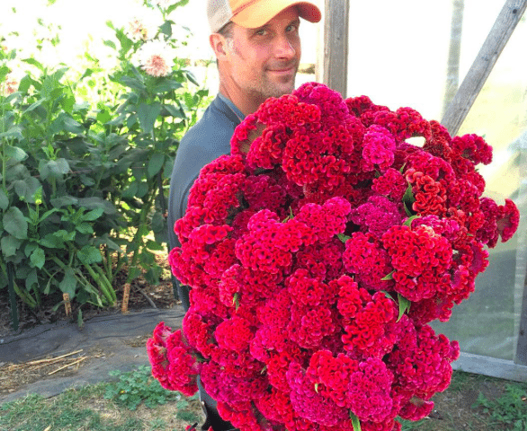 Chris Benzakein with an armload of celosia