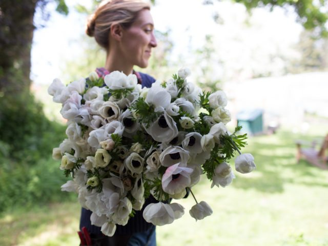 Erin Benzakein holding a large bouquet of black and white anemones