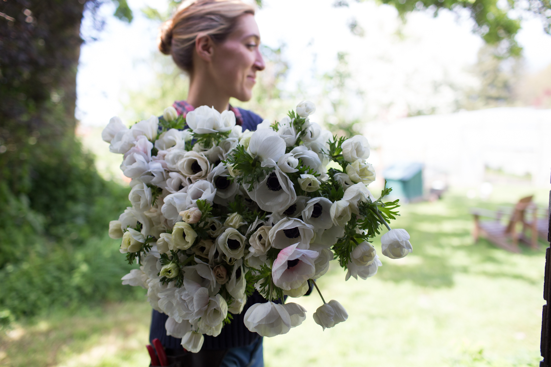 How to grow anemones floret flowers izmirmasajfo Choice Image