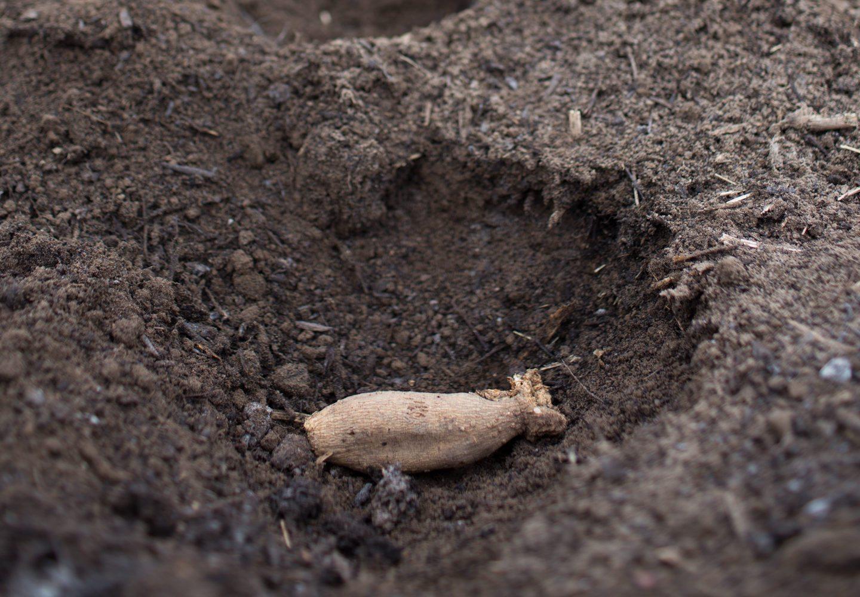 Floret_How To Grow Dahlias-9