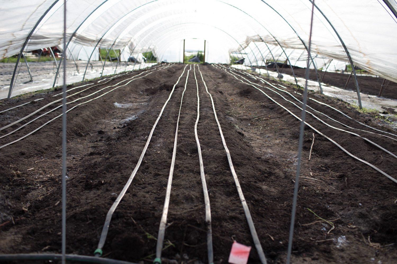 Floret_How To Grow Ranunculus-8