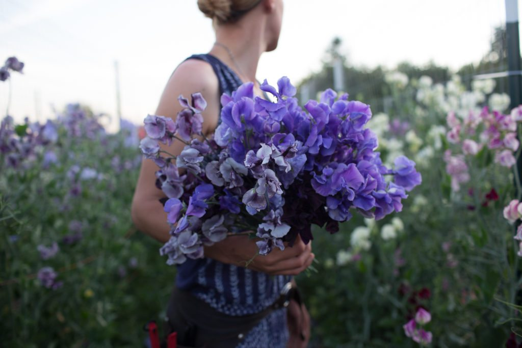 Floret_How To Grow Sweet Peas-2