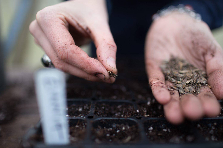 Floret_Seed Starting 101-10