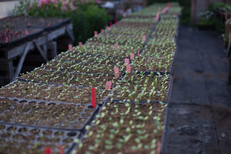 Floret_Seed Starting 101-17