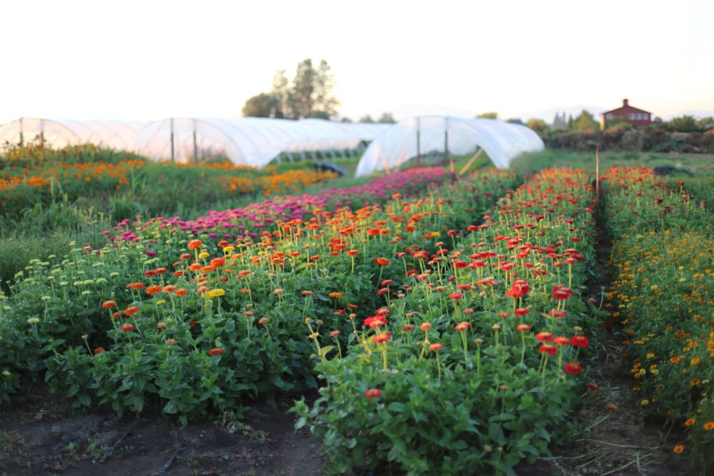 How-To Grow More Cut Flowers Than You Ever Thought Possible - Floret ...