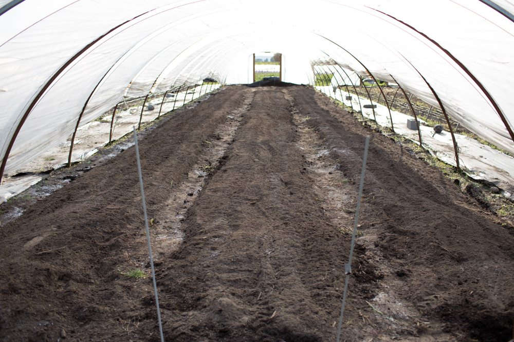 flower beds inside a hoop house with compost added