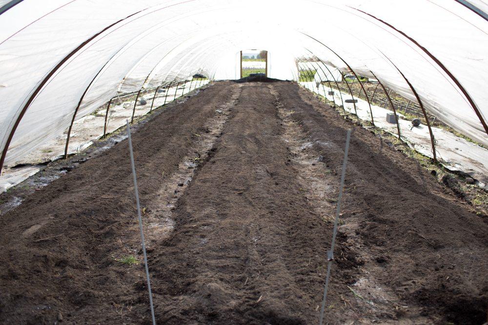 Floret hoop house flower bed soil preparation
