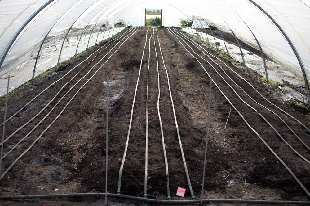 flower beds inside a hoop house with drip irrigation