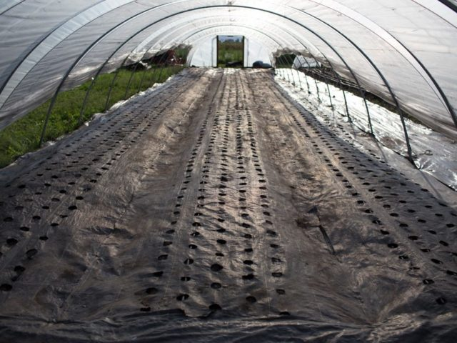 flower beds inside a hoop house with landscape fabric added