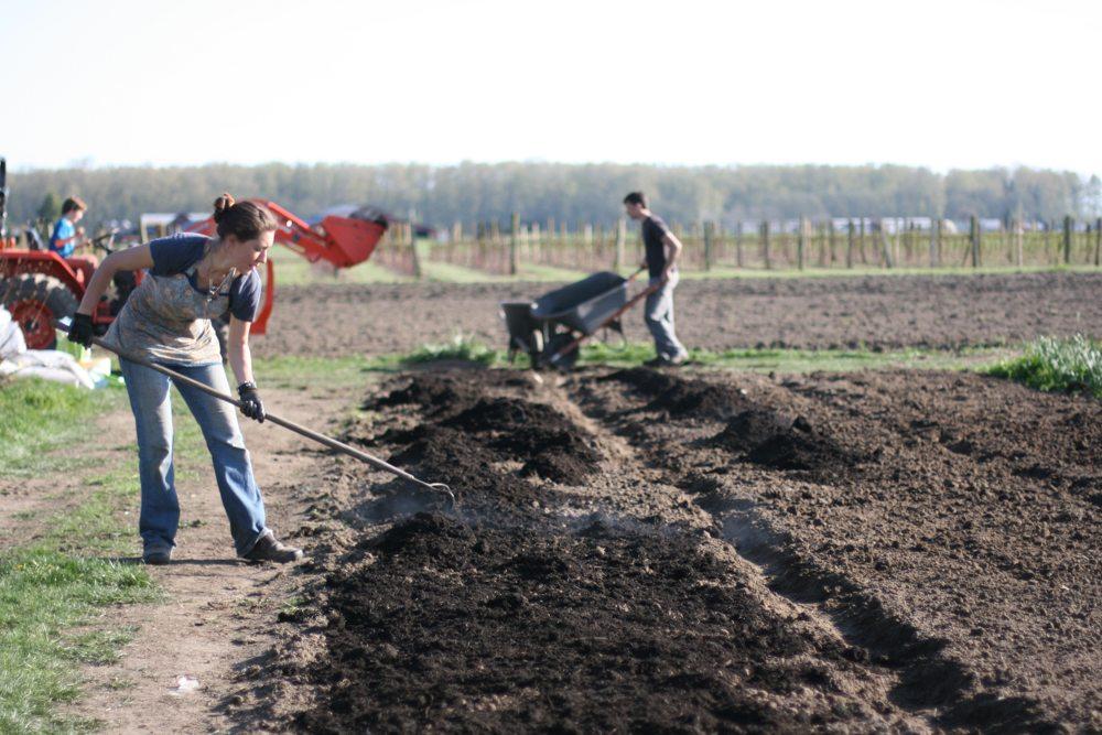 Spreading compost onto garden beds