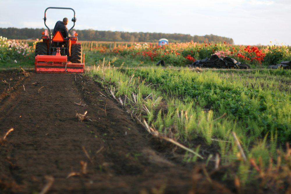 Soil Preparation - Floret Flowers