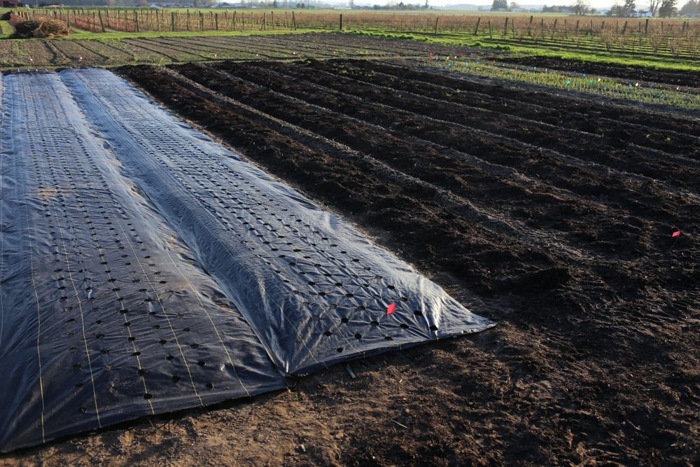 landscape fabric to cover garden beds for weed control
