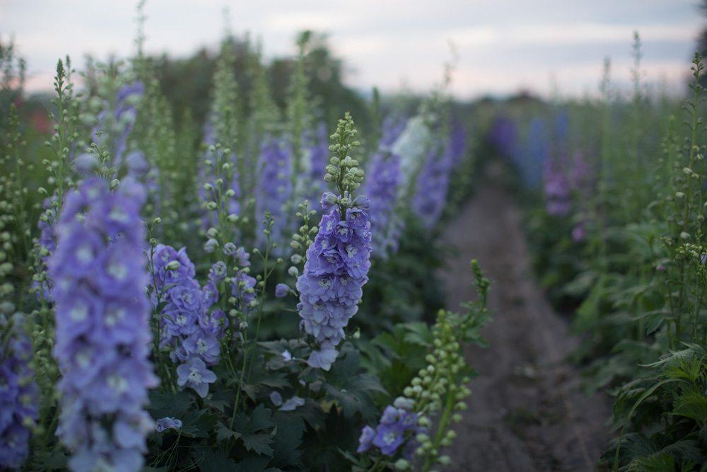 Floret_Grow_More_Flowers-12