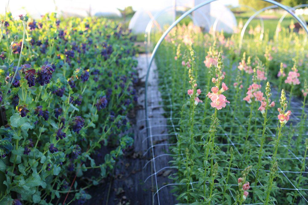 Floret_Grow_More_Flowers-5