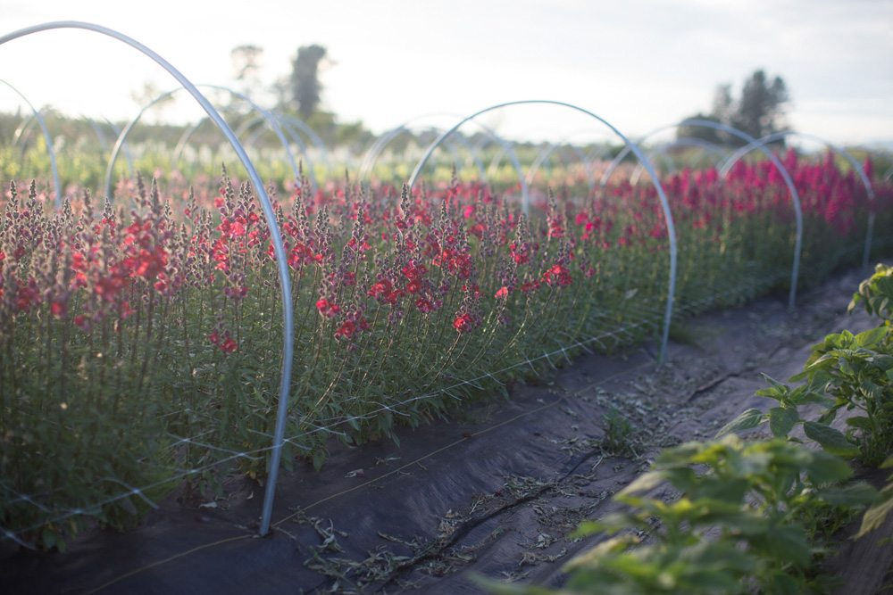 Floret_Grow_More_Flowers-9