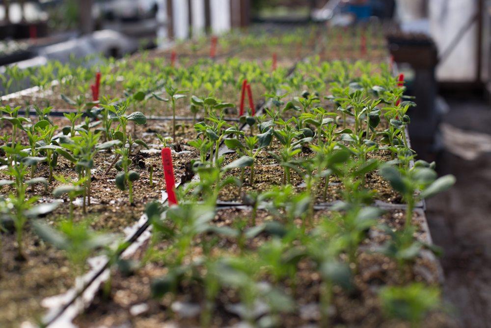 Floret_Seed Starting 101-9