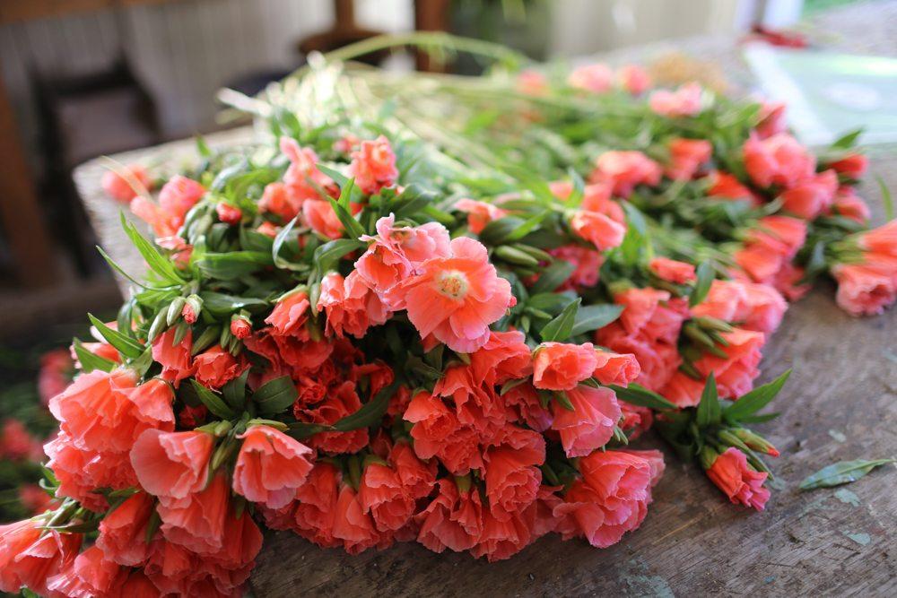 Floret_Succession Planting-11
