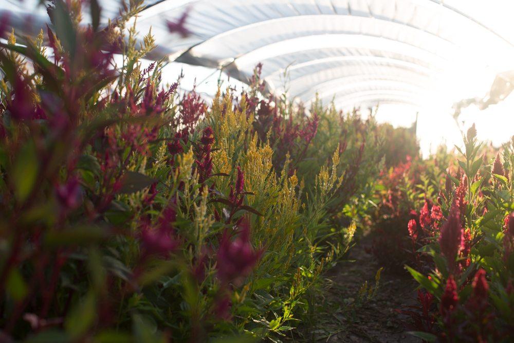 Floret_Succession Planting-21