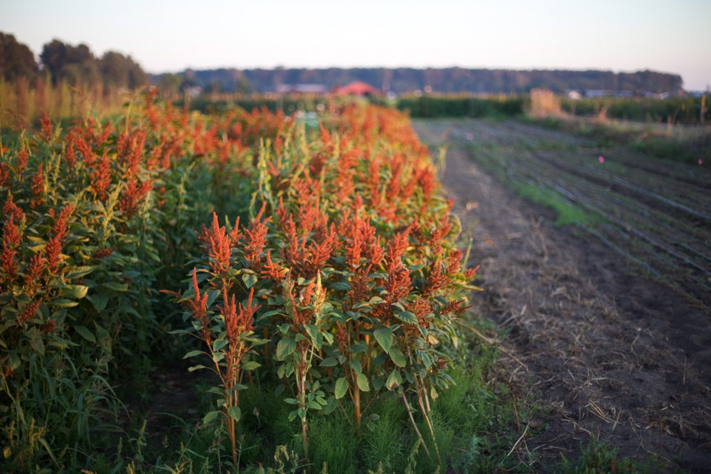 Floret_Succession Planting-8