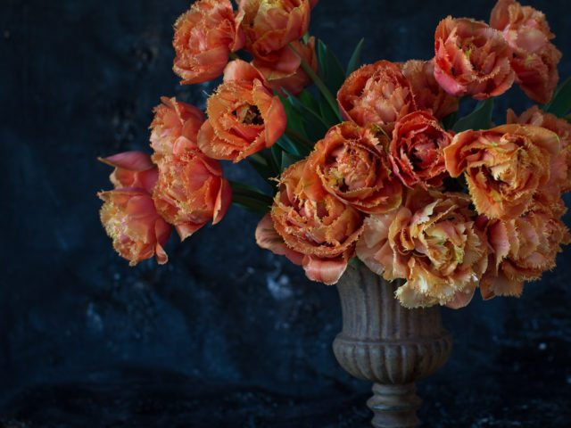 floret_tulips_sensual_touch