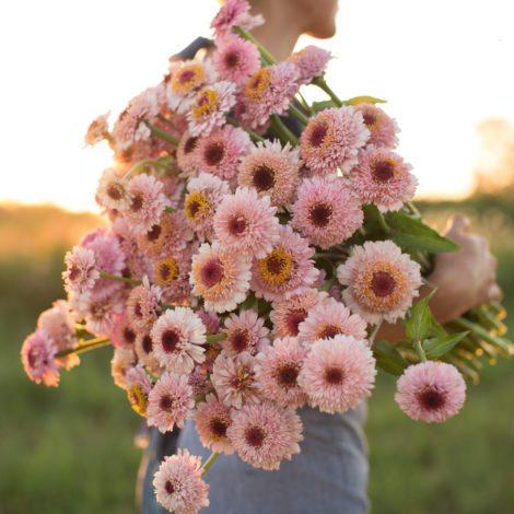 floret_zinnia_zinderella-lilac_670b0249