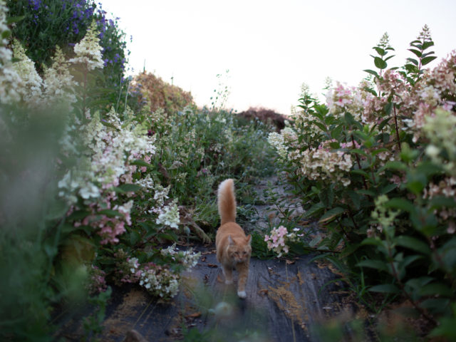 Timmy the cat in a row of flowers