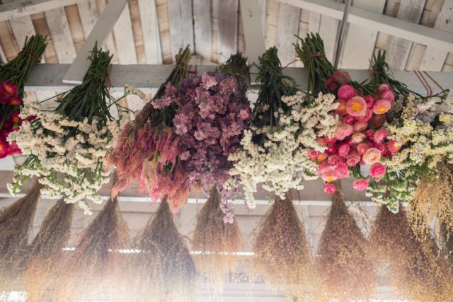 dried flowers in studio