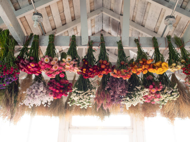 bunches of flowers hanging for drying