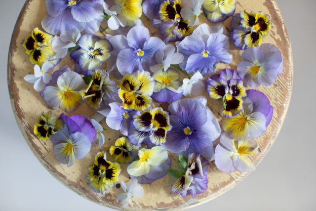 Violas and pansies from Floret