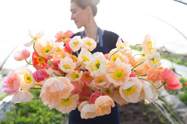 Erin of Floret with armload of Iceland Poppies