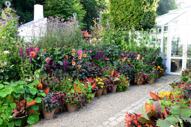 Container plantings for flowers Claus Dalby interview on Floret Blog