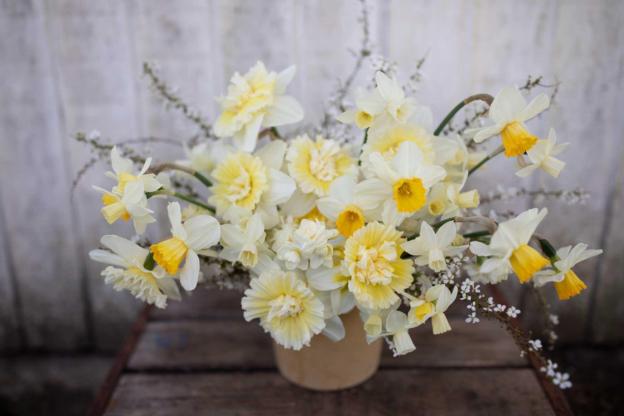 An arrangement of daffodils