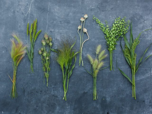 Grasses in bunches