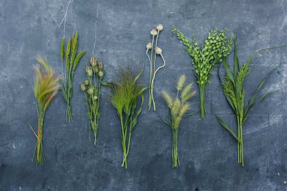 Grasses Grains And Pods Floret Flowers