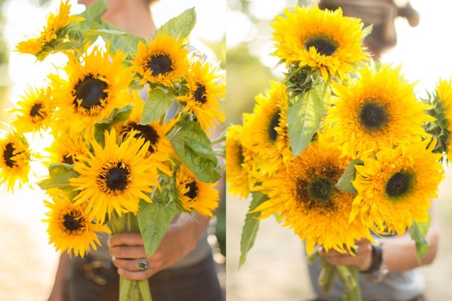Sunflowers with frilled petals