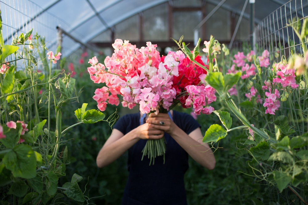Success with Sweet Peas - Floret Flowers