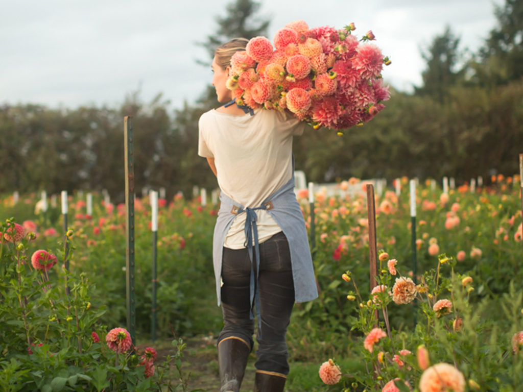 Erin Benzakein with an armload of dahlias in the Floret field