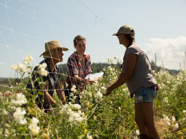 Erin Benzakein and the Floret crew in the sweet pea field